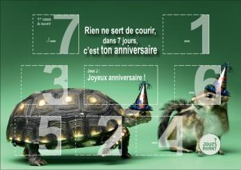 7JAvant-HRZ-tortue-decoupe